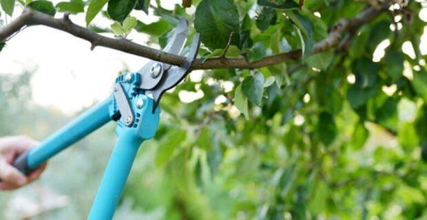 best tree pruning ladder